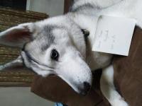 Zira my Baby Girl