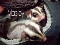 Maeloy